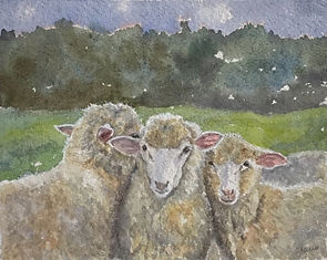 Tres Amigos ( on handmade paper) 3 sheep watercolor Yvonne Haus