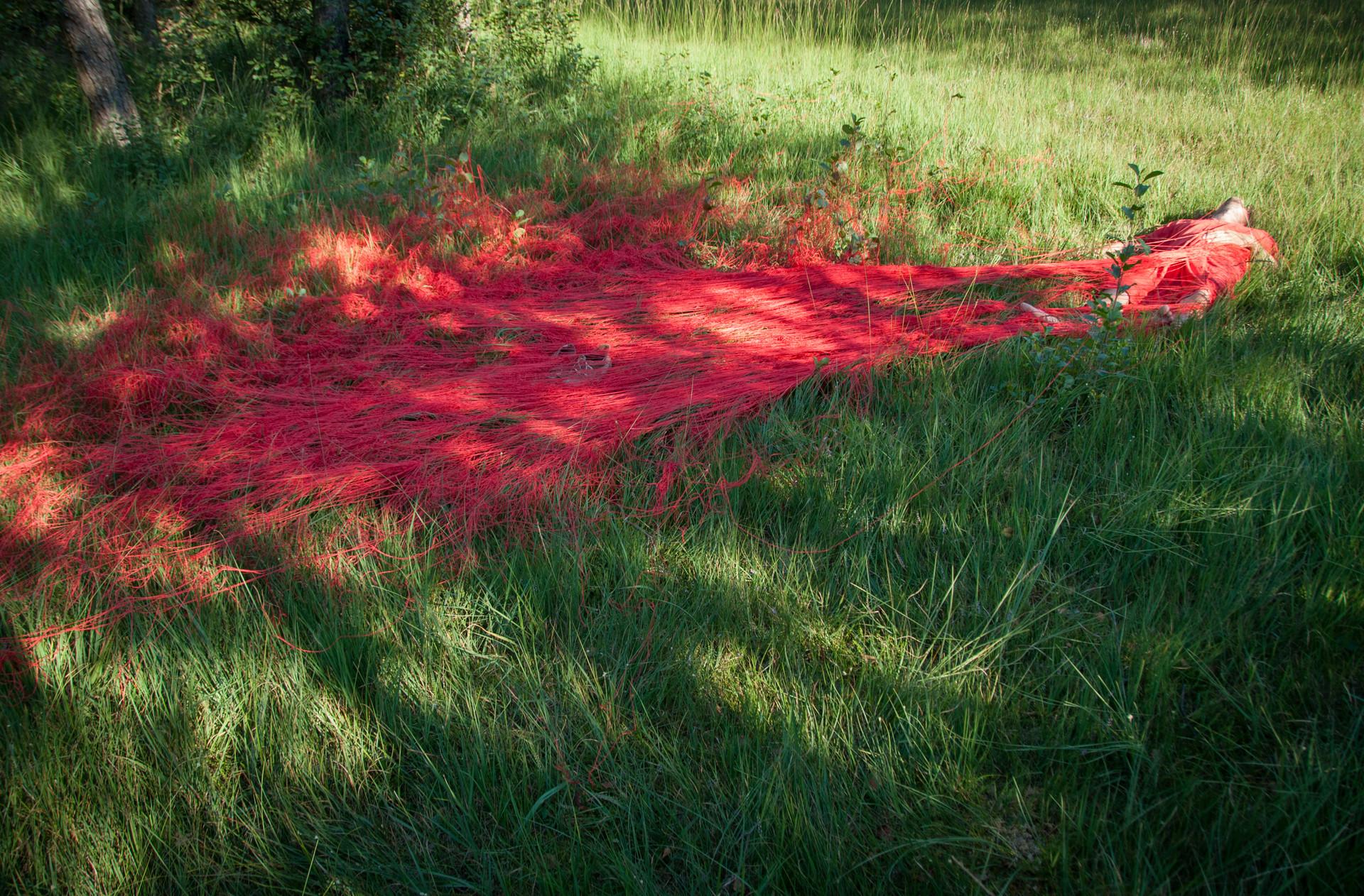Der rote Faden im Ibmer Moor.jpg