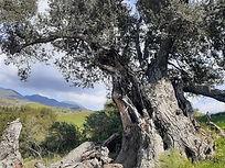 Old Tree 3.21.jpg