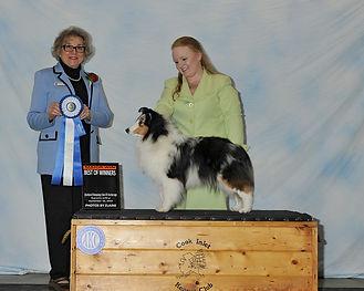 Elsa-DSC3242.jpg  Best of Winners SSCA.j