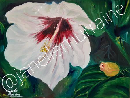 White Hibiscus, 18x24 oil on canvas
