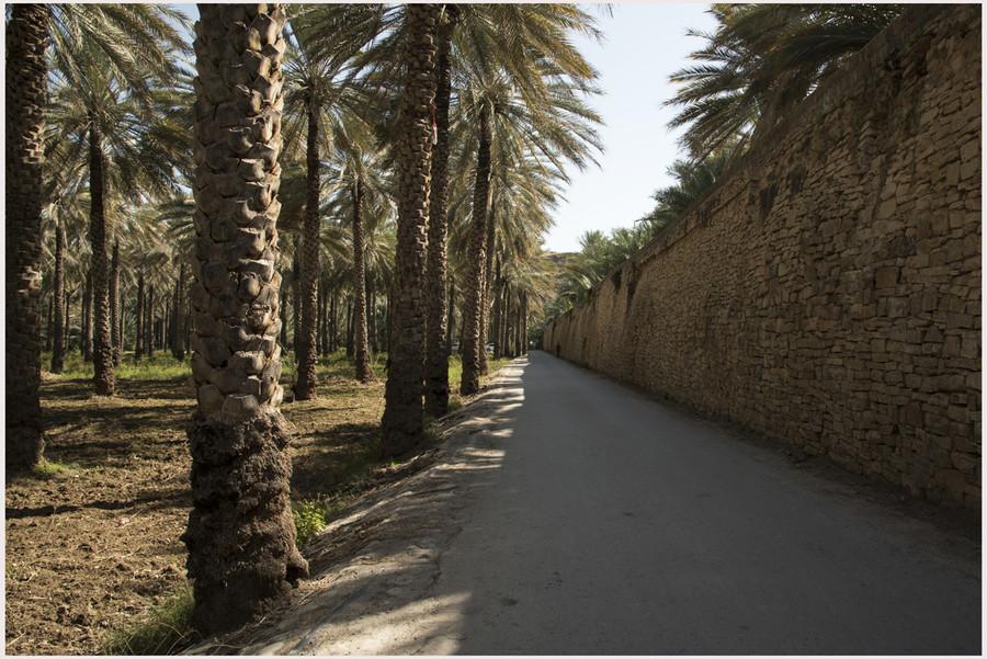 Oasi di Al Hamra - Muro di cinta della città vecchia affianco all'oasi