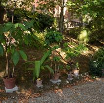 Zona piante esotiche
