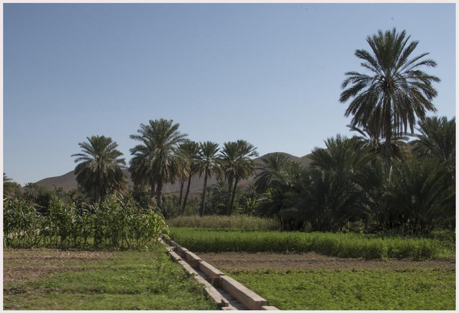 Oasi di Al Hamra - Canali d'irrigazione -