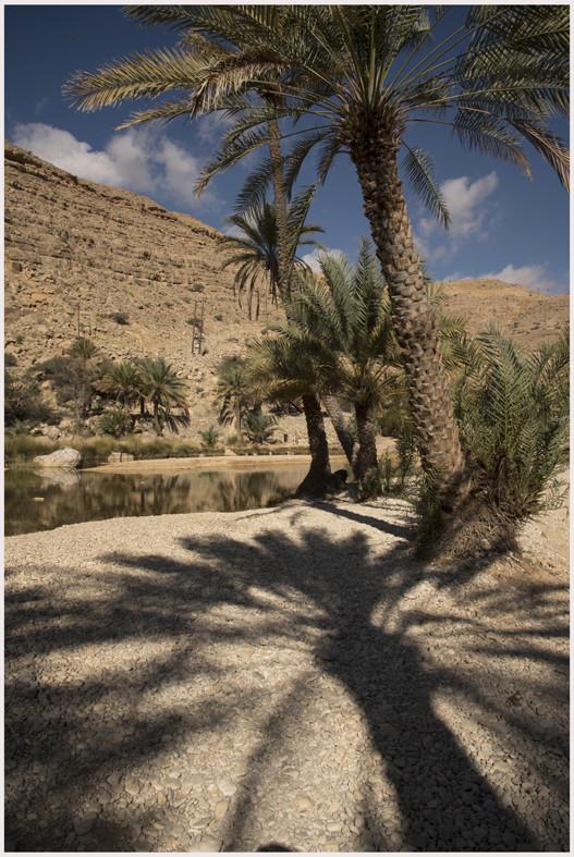 Wadi Bani Khalid - palme