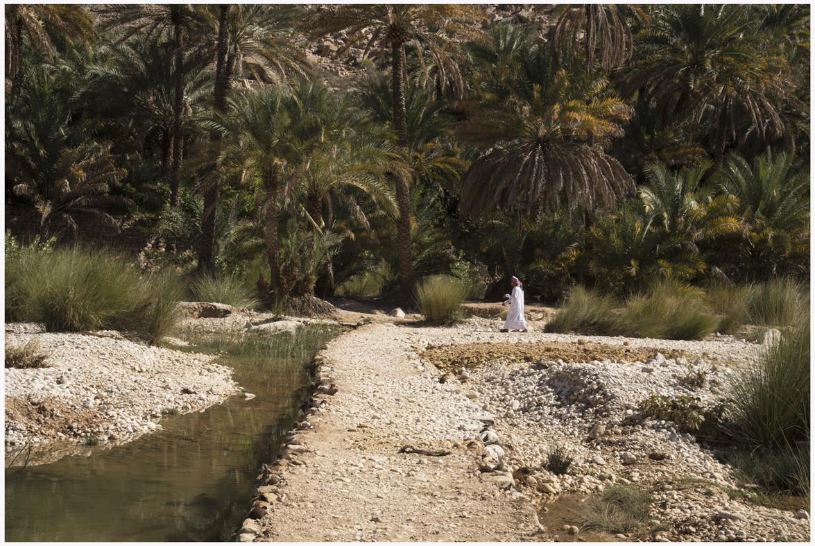 Wadi Bani Khalid - piccola oasi