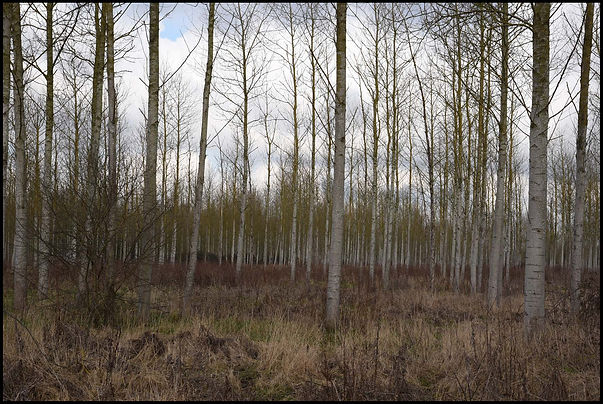 bosco di anni.jpg