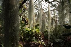 Orto Botanico di Ginevra