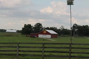 Barn and bird house - Copy.JPG