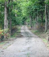 The Lane.JPG