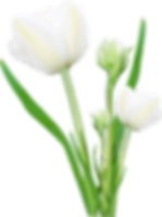 bouquet_PNG57.png