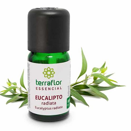 Óleo Essencial Eucalipto Radiata 10ml - Terraflor