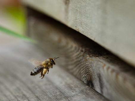 """Die Bürgergemeinde Pfeffingen ist neu """"Gotte""""  eines Beinenvolkes von Pfeffingenbees.ch"""