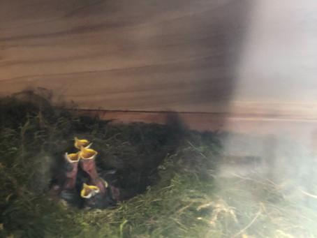 Umnutzung eines leeren Bienenkastens durch die Natur