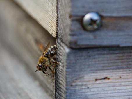 Start der Bienensaison