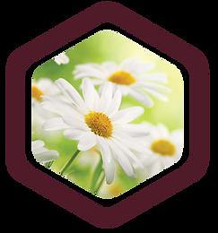 wildflower-Mazzra-fresh-farm-oberon.png