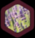 lavender-Mazzra-fresh-farm-oberon.png