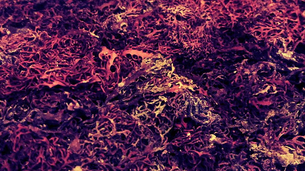 St. Thomas Purple Sea Moss