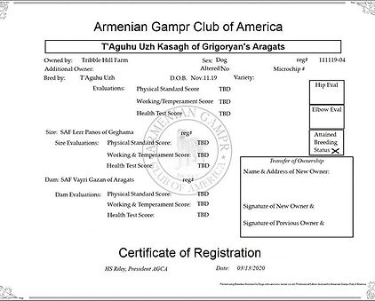 Registered with the Armenian Gampr Club
