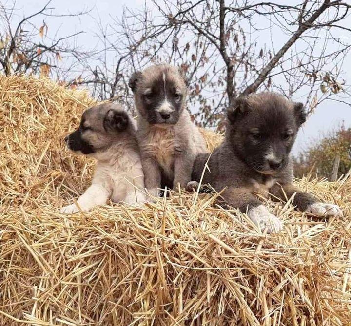 Kura and siblings