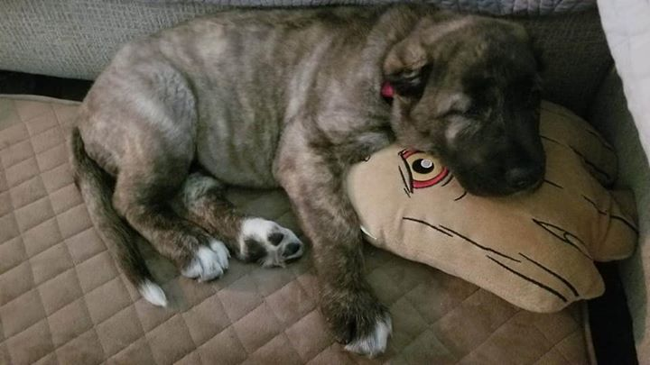 Sevan and her favorite Groot pillow