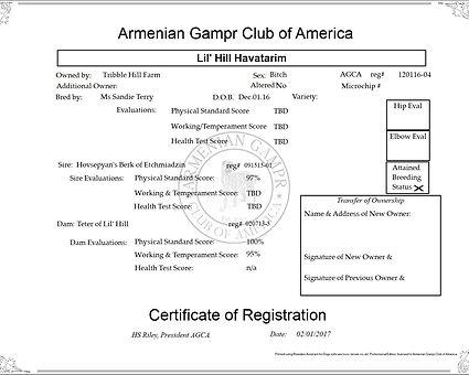 Hava registration.jpg