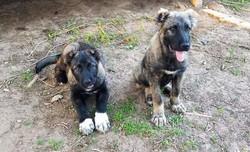 Sev and sister Cinder
