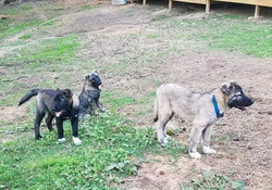 Sev, Cinder and Ash