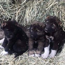 Sev left with siblings in Armenia