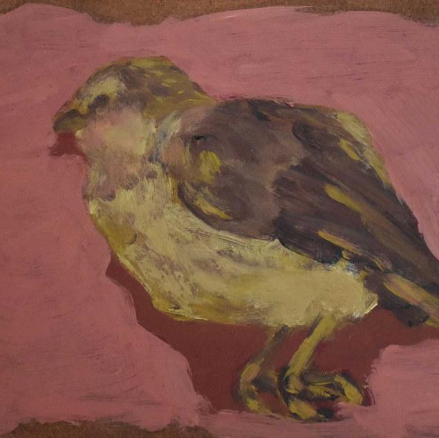 Pájaro muerto (el primero)