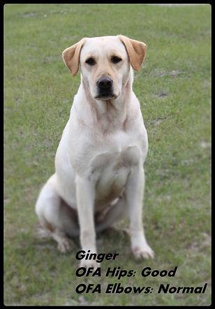 Ginger WEB.jpg