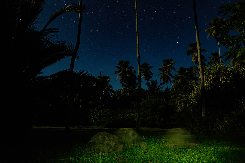 Photographing on a full moon night is challenging especially with a bumbling tortoise in the fore-ground