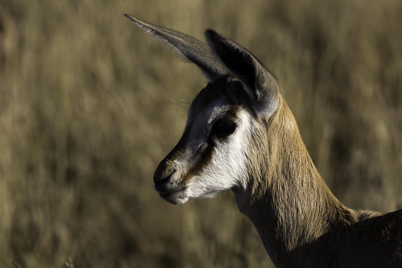KTP Springbok