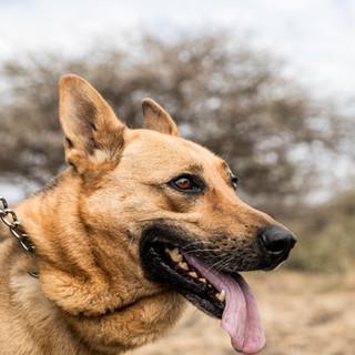 Tracker dog queen
