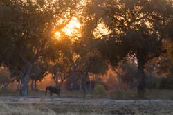 ManaPools Elephants