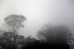 Danum Valley early morning
