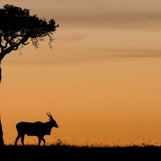 Eland at 4am