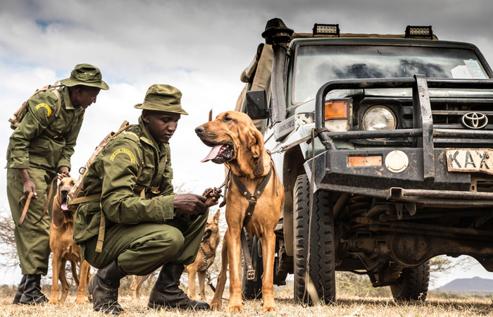 Anti-poaching dogs of the Chyulu Hills: when domestic animals work in wildlife conservation