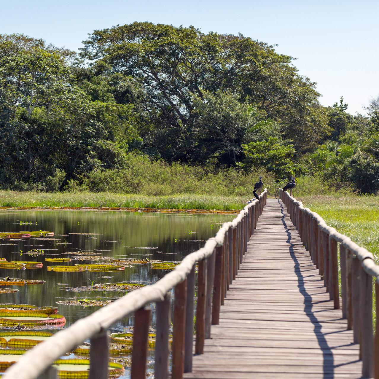 Porto Jofre Pond