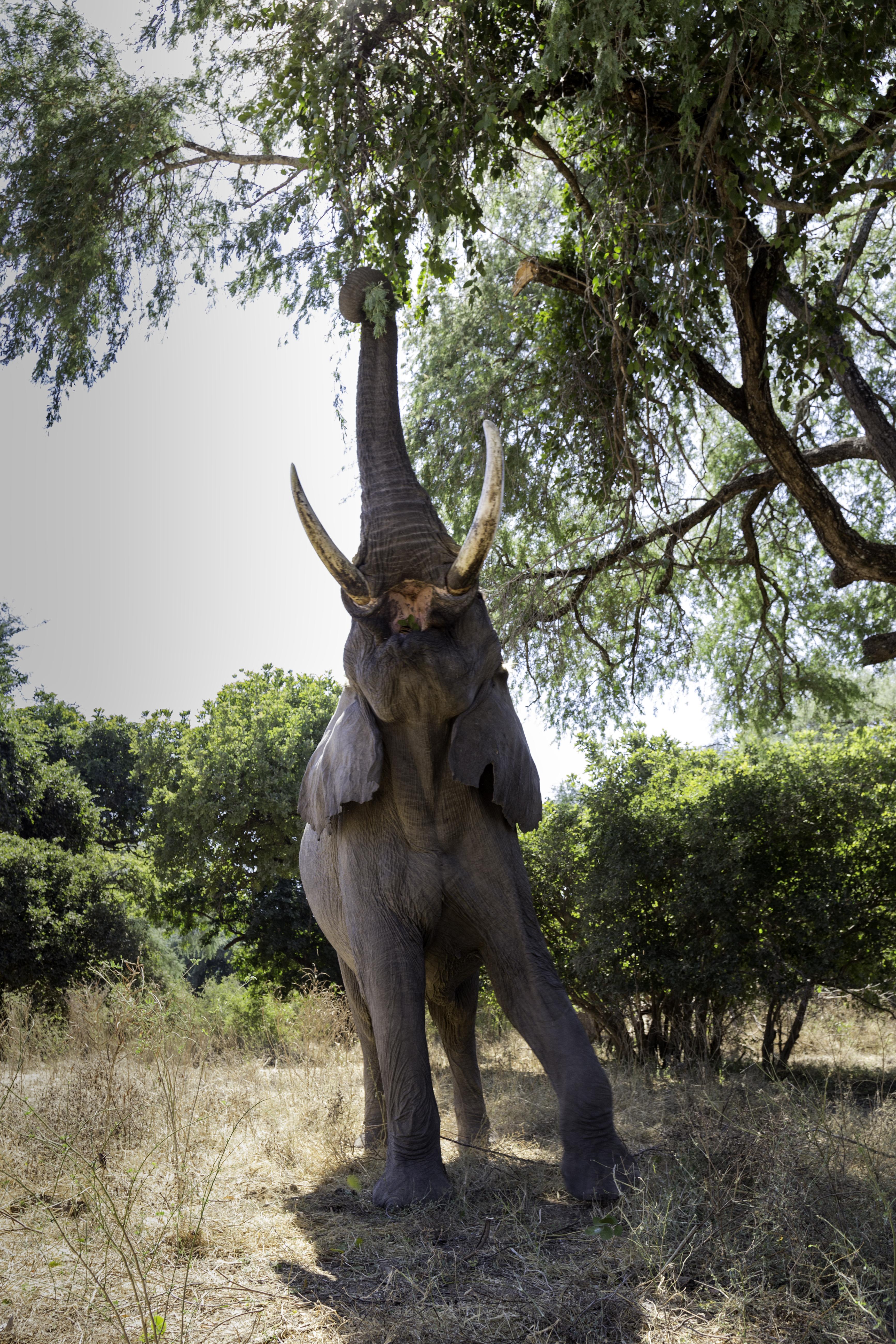 ManaPools Elephant