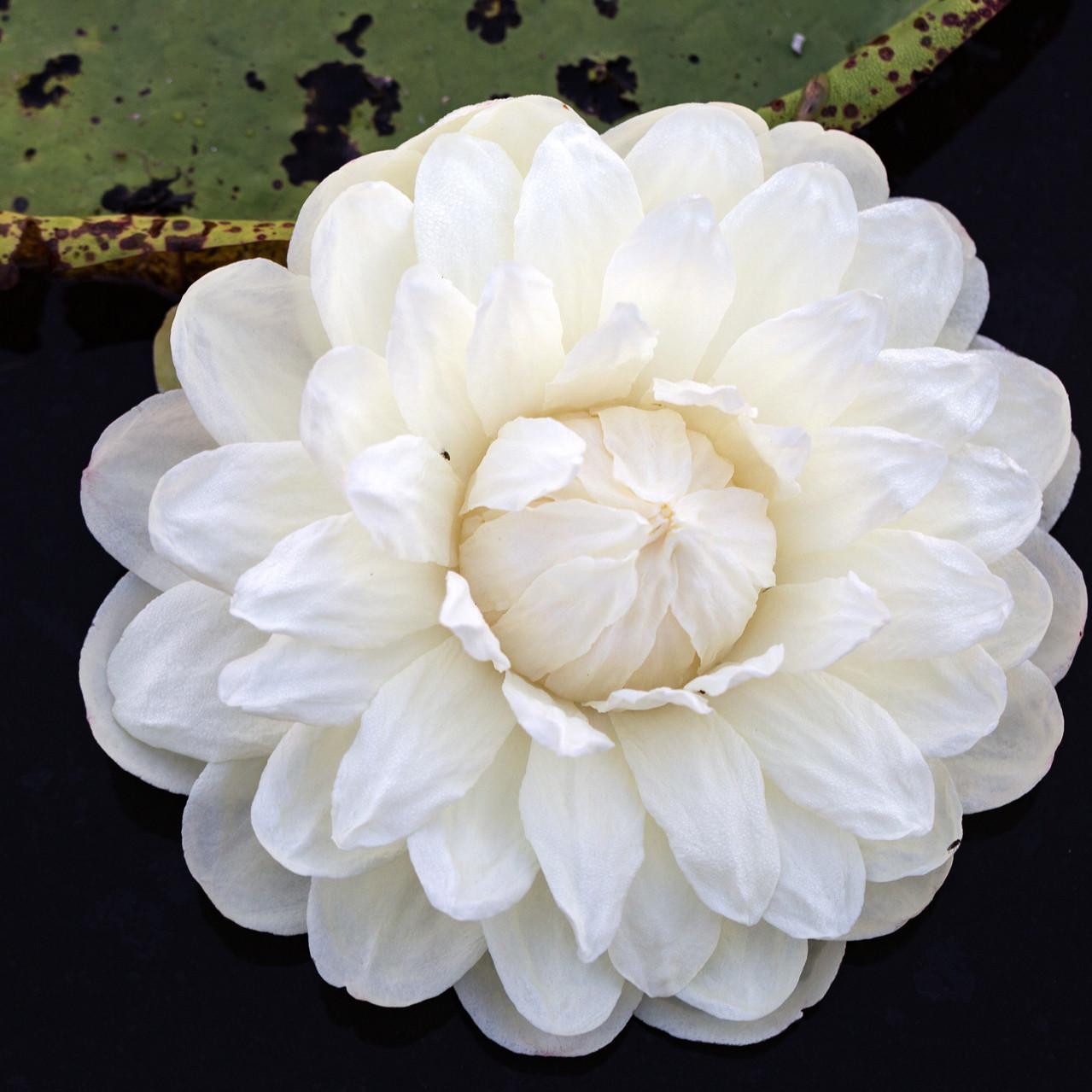 Flower female morning