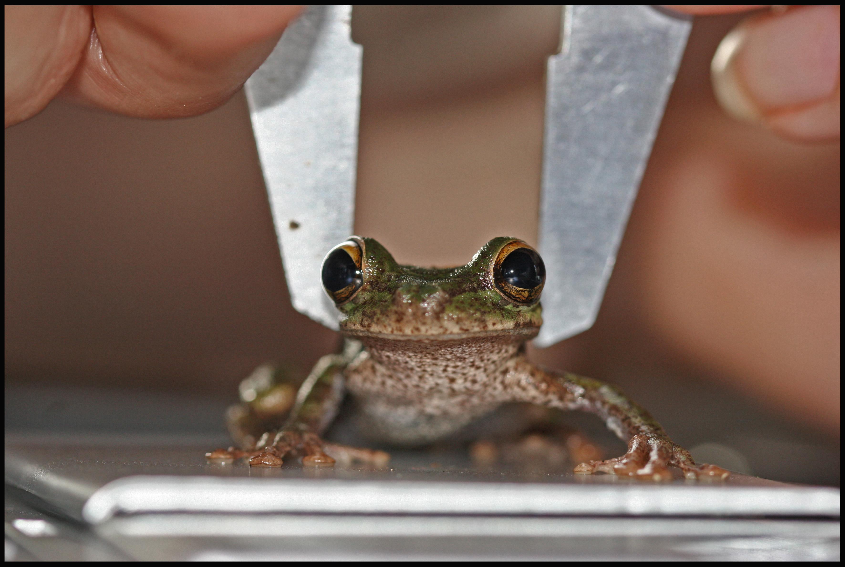 Frog biometrics