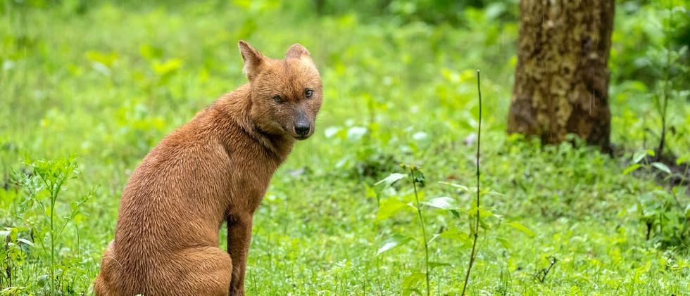 Wild dogs (05).jpg