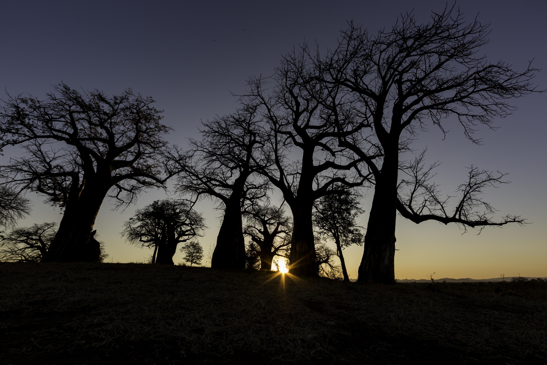 ManaPools Baobab sunrise