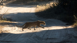 ManaPools Leopard