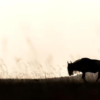 Wilderbeest in Ol Donyo
