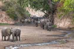 Chitake springs elephant