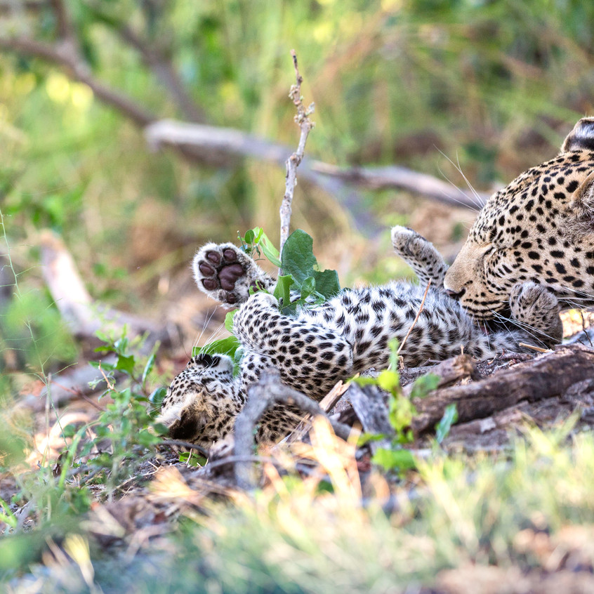 Leopard cub 7