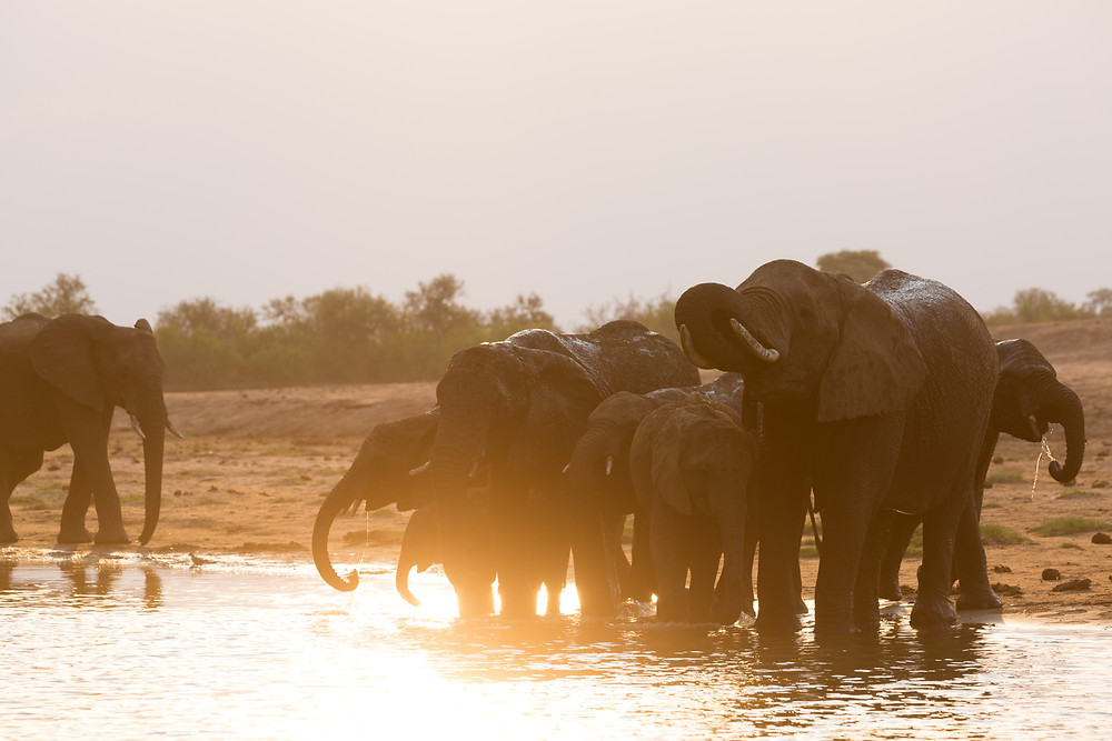 Elephants, one of the Big Five that draw tourists from all corners of the world.