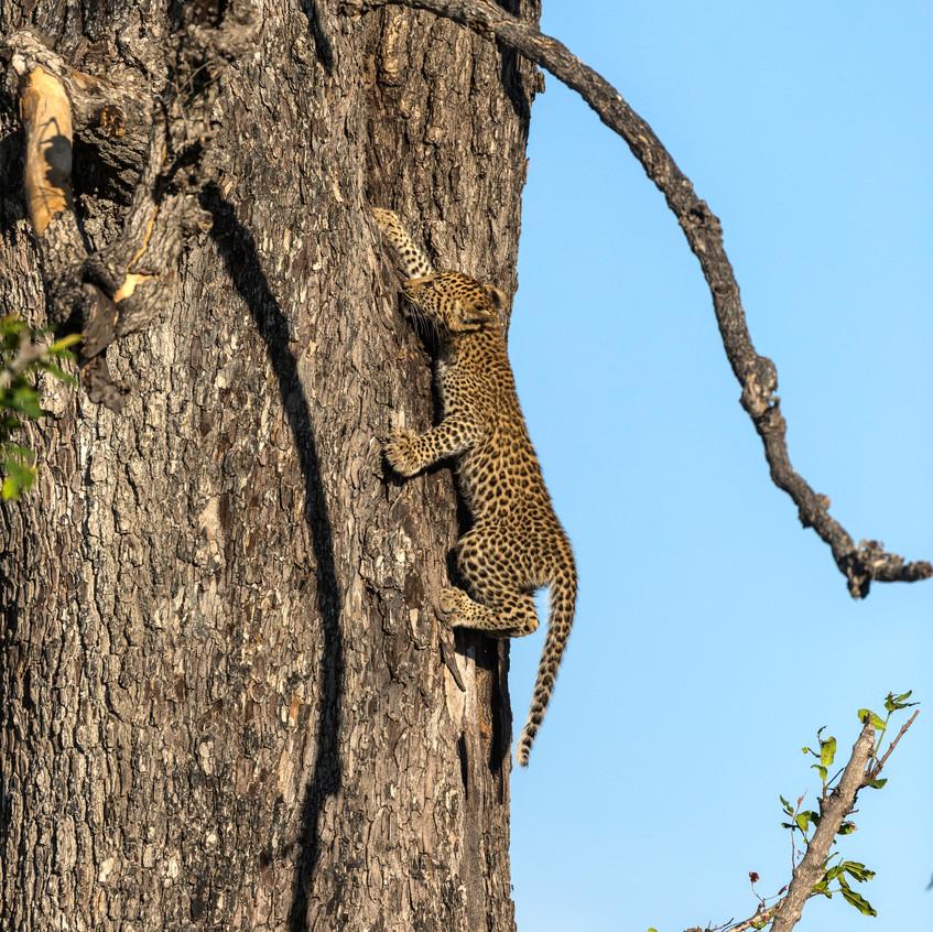 Leopard cub 6
